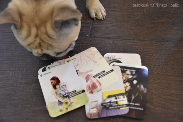 Ranskanbulldoggi Uuno haistaa inspiraatiokorteissa arjen elävöittämisen mahdollisuuden.